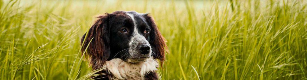 perro descansa en la hierba
