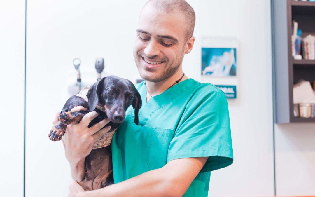 Per què esterilitzar la teva mascota?